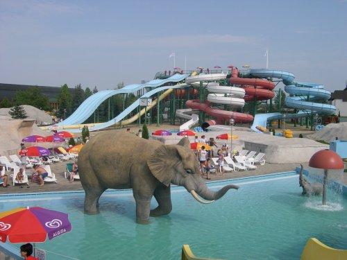 elefant500_284_20080509103046_77.JPG