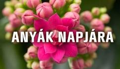 Szeretettel köszöntjük az Édesanyákat és Nagymamákat!