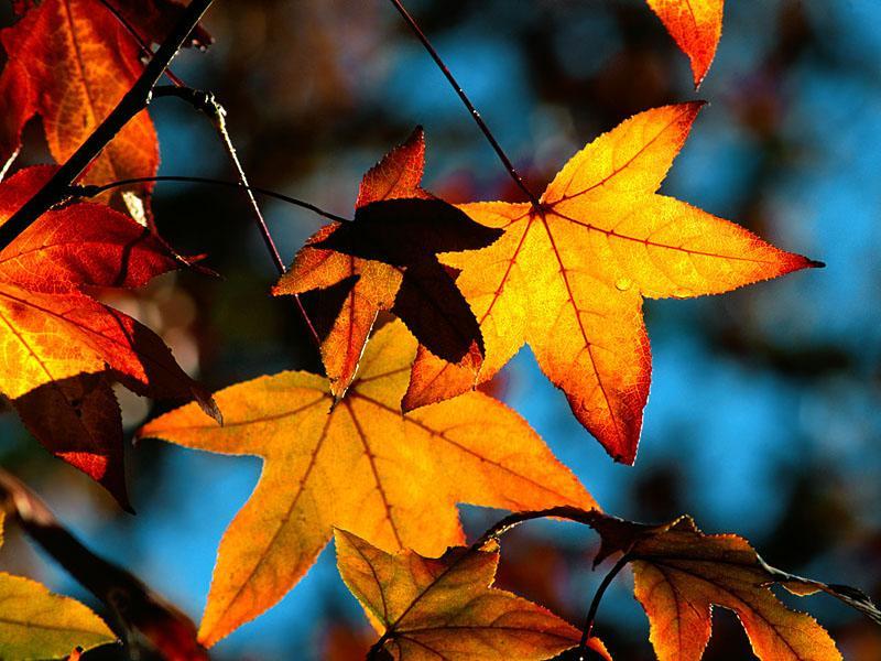 Őszi szünet - Családi akció
